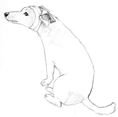 Bandage dog