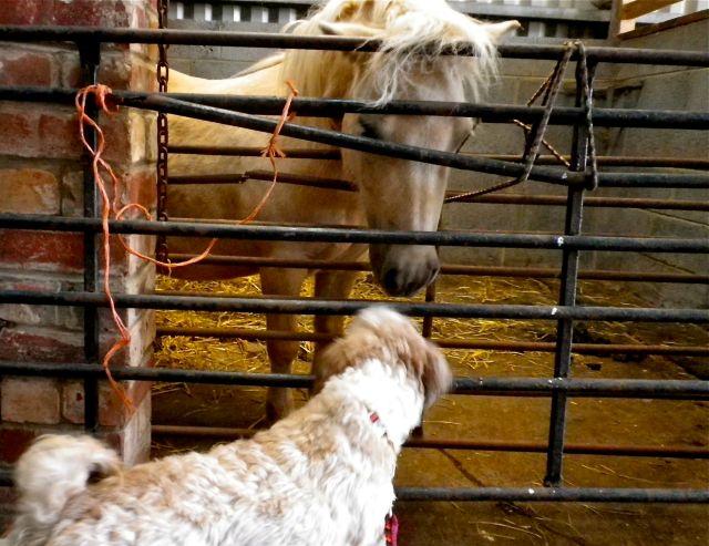 Lola and pony