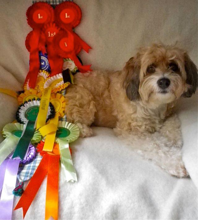 Lola ribbons